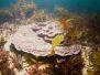 2012-06-09 Nargra Reef