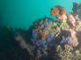 2012-06-09 Saxon Reef