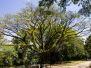 2012-09-15 Cairns Botanic Gardens