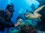 2012-09-17 Pro Dive Cairns Liveaboard