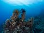 2012-09-25 Agincourt reef