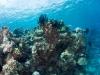 agincourt-reef-057
