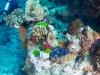 agincourt-reef-063