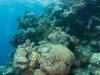 agincourt-reef-109