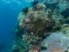 agincourt-reef-110