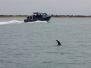 2012-10-28 Castle Rock & dolphin encounter