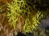 Coral closeup