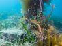 2012-12-30 Flinders Pier