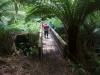 Crossing a bridge in Melba Gully