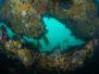 2013-01-19 Z Reef