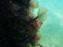 2013-02-16 Mordialloc Pier snorkeling