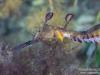 Seadragon headshot