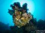 2013-02-24 Stella Reef