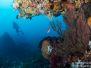 2013-02-24 Sven\'s Reef