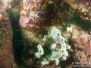 2013-03-09 Wonthaggi Reef