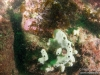 Reef and poor vis