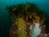 Kelp pillar