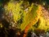 Zoanthid closeup