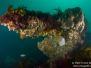 2013-04-06 Stellar Reef