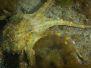 2013-04-10 Point Gellibrand snorkel