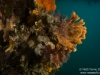 Sponges and ascidians