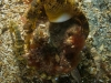 The seahorse pair, different angle