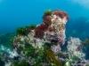 Rocky reefs