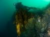 Hugh and some big kelp