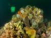 Hugh vanishing behind the reef