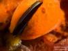 Mussel inside a sponge