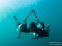 2013-09-14 Portsea Backbeach