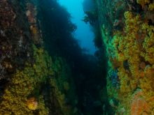 Zoanthid canyon