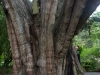 Eija hiding behind a big tree