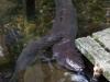 Friendly eels