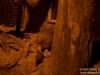 Kiwi, still blurry :(