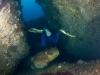 humpback-027-2