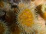 2012-01-10 Seadragons at Flinders Pier