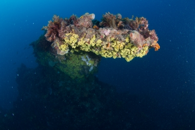svens-reef-037