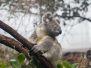 2012-01-03 Sydney Wildlife
