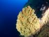 Corals at Pinnacles