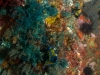 true-love-reef-031