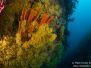 2013-11-04 Seawhip Cove
